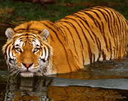 Best of East India Wildlife Tour