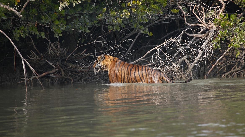 Sunderban National Park Tiger Reserve India Tourism Guide