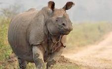 tiger-rhino-tour